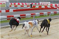 Greyhound_Racing_Greyhound_Park_Motol_Prague_CGDF_6565.JPG