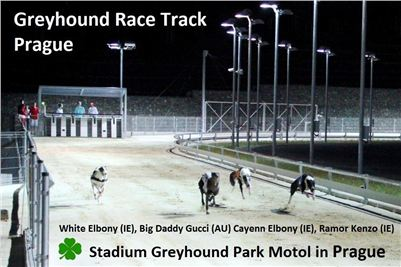 Greyhound_Race_Track_Prague_in_Stadium_Greyhound_Park_Motol_CGDF_v.jpg