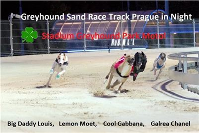 Greyhound_Sand_Race_Track_Prague_Stadium_Greyhound_Park_Motol_CGDF.jpg