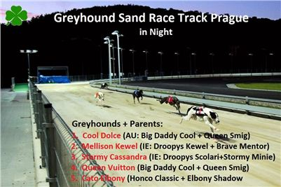 Night_Greyhound_Race_Track_Prague_Stadium_Greyhound_Park_Motol_CGDF.jpg