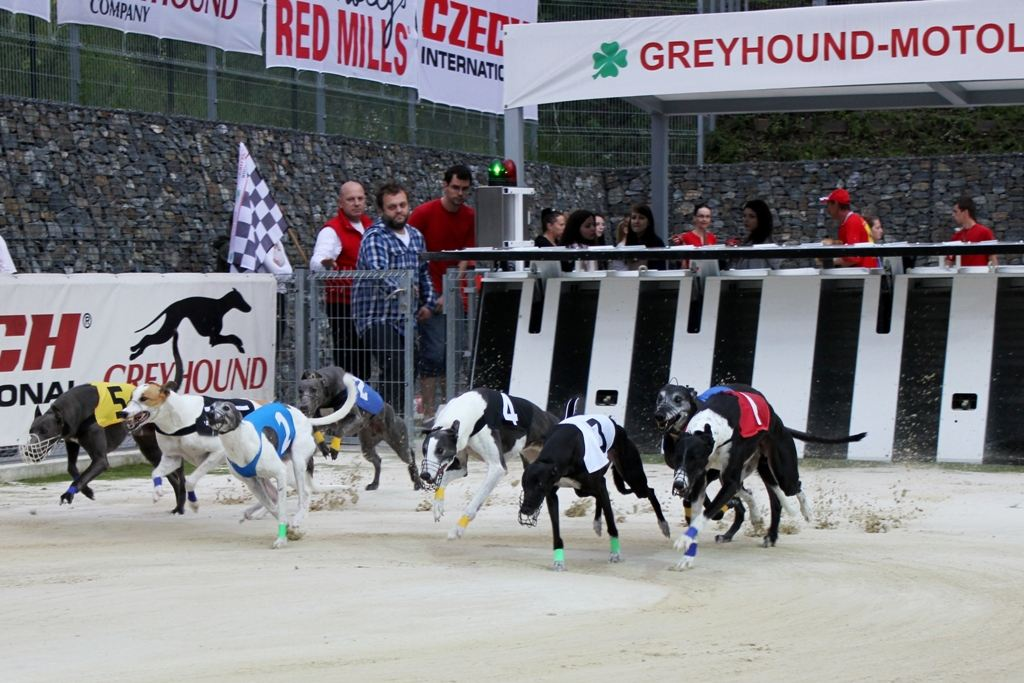 http://www.cgdf.cz/user_data/cms/fotogalerie/01647/large/2-Greyhound_Park_Motol_Czech_Greyhound_Racing_Federation_IMG_9386_v.jpg