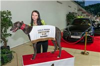 Lexus_Praha_Greyhound_Race_Winner_Gucci_CGDF_2130626_250.jpg