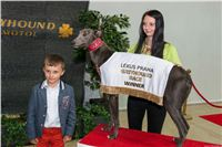 Lexus_Praha_Greyhound_Race_Winner_Gucci_CGDF_252.jpg