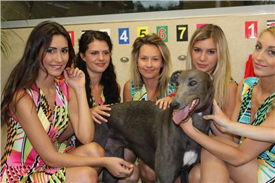 Greyhound_Park_Motol_vitez_Lexus_Praha_Greyhound_Race_2013_Gucci_CGDF.JPG