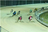 Grand_Opening_Greyhound_Park_Motol_Prague_RF_0708.jpg