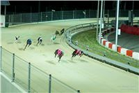 Grand_Opening_Greyhound_Park_Motol_Prague_RF_0710.jpg