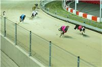 Grand_Opening_Greyhound_Park_Motol_Prague_RF_0712.jpg