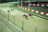 Grand_Opening_Greyhound_Park_Motol_Prague_RF_0713.jpg
