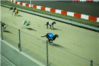 Grand_Opening_Greyhound_Park_Motol_Prague_RF_0714.jpg