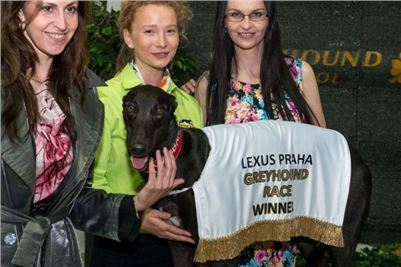 Greyhound_Gabbana_Czech_Greyhound_Racing_Federation_Prague_Motol_278.jpg