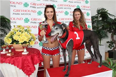Grand_Prix_Greyhound_Park_Motol_Prague_IMG_5618.JPG