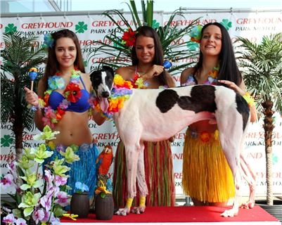 2. Hawaii_Greyhound_Park_Motol_Prague_IMG_8656.JPG