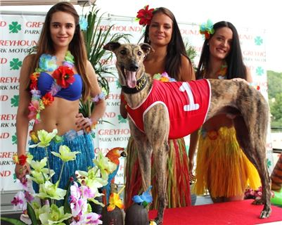 3. Hawaii_Greyhound_Park_Motol_Prague_ IMG_9141.JPG