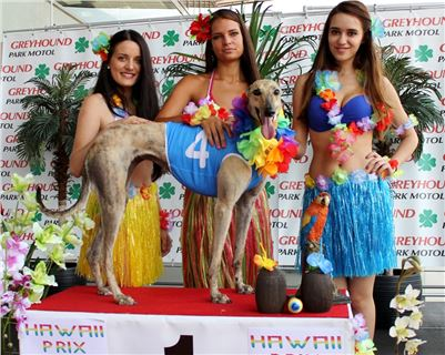 4. Hawaii_Greyhound_Park_Motol_Prague_ IMG_9294.JPG