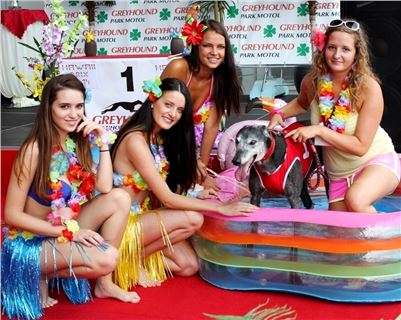 5. Hawaii_Greyhound_Park_Motol_Prague_IMG_8982.JPG