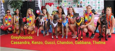 Hawaii_Greyhound_Park_Motol_dostihy_chrtu_IMG_9259_v.JPG