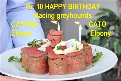 10_Happy_Birthday_Racing_Greyhounds_Ceska_Greyhound_Dostihova_Federace_IMG_9622_v.JPG
