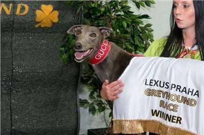 Greyhound_Gucci_Czech_Greyhound_Racing_Federation_Prague_Motol_256.jpg