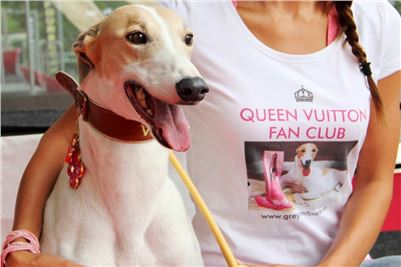 Queen_VUITTON_Fan_Club_Greyhound_Park_Motol_Prague_Racing_IMG_3359_vv.JPG