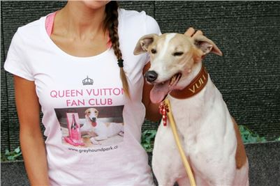 Queen_Vuitton_Fan_Club_Czech_Greyhound_Racing_Greyhound_Park_Motol_Prague_NQ1M0669_r.JPG