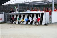 04_Chrti_dostihy_Greyhound_Racing_Park_Praha_Czech_International_Derby_8116.jpg