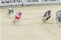30_ Chrti_dostihy_Greyhound_Racing_Park_Praha_Czech_International_Derby_7958.jpg