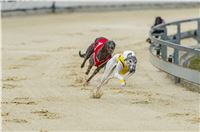 32_Chrti_dostihy_Greyhound_Racing_Park_Praha_Czech_International_Derby_7959.jpg