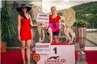 37_Chrti_dostihy_Greyhound_Racing_Park_Praha_Czech_International_Derby_2281.jpg