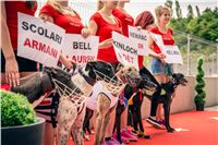 41_Chrti_dostihy_Greyhound_Racing_Park_Praha_Czech_International_Derby_2300.jpg
