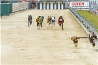 46_Chrti_dostihy_Greyhound_Racing_Park_Praha_Czech_International_Derby_2305.jpg