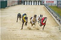 47_Chrti_dostihy_Greyhound_Racing_Park_Praha_Czech_International_Derby_2307.jpg