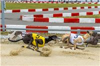 48_Chrti_dostihy_Greyhound_Racing_Park_Praha_Czech_International_Derby_2314.jpg