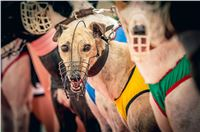 58_Chrti_dostihy_Greyhound_Racing_Park_Praha_Czech_International_Derby_2399.jpg
