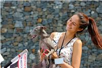 01_Chrti_dostihy_Greyhound_Racing_Park_Praha_Bookmakers_CuP_IMG_9848.jpg
