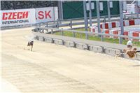 01_Chrti_dostihy_Greyhound_Racing_Park_Praha_Bookmakers_CuP_IMG_9852.jpg