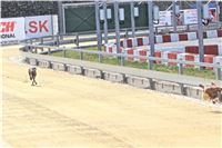 01_Chrti_dostihy_Greyhound_Racing_Park_Praha_Bookmakers_CuP_IMG_9853.jpg