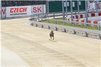 01_Chrti_dostihy_Greyhound_Racing_Park_Praha_Bookmakers_CuP_IMG_9855.jpg