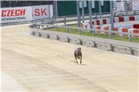 01_Chrti_dostihy_Greyhound_Racing_Park_Praha_Bookmakers_CuP_IMG_9856.jpg