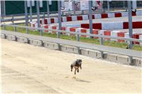01_Chrti_dostihy_Greyhound_Racing_Park_Praha_Bookmakers_CuP_IMG_9858.jpg