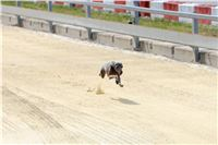 01_Chrti_dostihy_Greyhound_Racing_Park_Praha_Bookmakers_CuP_IMG_9859.jpg