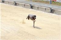 01_Chrti_dostihy_Greyhound_Racing_Park_Praha_Bookmakers_CuP_IMG_9860.jpg