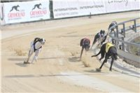 02_Chrti_dostihy_Greyhound_Racing_Park_Praha_Bookmakers_CuP_IMG_9886.jpg