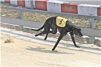 02_Chrti_dostihy_Greyhound_Racing_Park_Praha_Bookmakers_CuP_IMG_9888.jpg