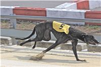 02_Chrti_dostihy_Greyhound_Racing_Park_Praha_Bookmakers_CuP_IMG_9889.jpg