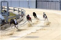 02_Chrti_dostihy_Greyhound_Racing_Park_Praha_Bookmakers_CuP_IMG_9892.jpg