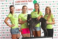 03_Chrti_dostihy_Greyhound_Racing_Park_Praha_Bookmakers_CuP_IMG_9937.jpg