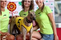 05_Chrti_dostihy_Greyhound_Racing_Park_Praha_Bookmakers_CuP_.jpg