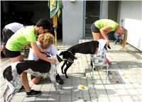05_Chrti_dostihy_Greyhound_Racing_Park_Praha_Bookmakers_CuP_DSC07795_u.jpg
