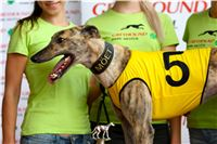 05_Chrti_dostihy_Greyhound_Racing_Park_Praha_Bookmakers_CuP_IMG_0037.jpg