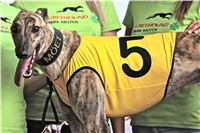 05_Chrti_dostihy_Greyhound_Racing_Park_Praha_Bookmakers_CuP_IMG_0038.jpg
